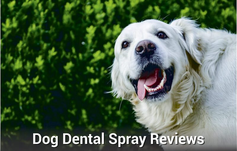 Dog Dental Spray Reviews