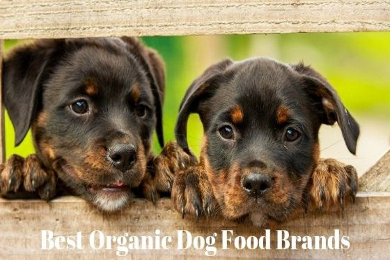 best organic dog food brands