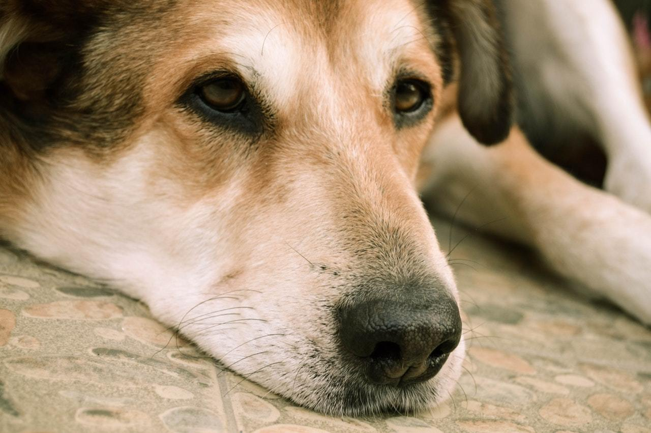 How To Deal With Your Dog's Separation Anxiety