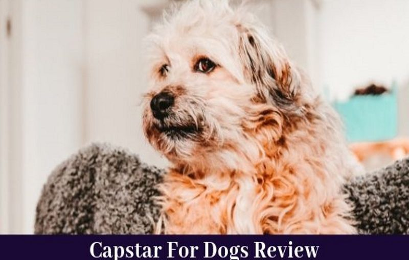 capstar for dogs review