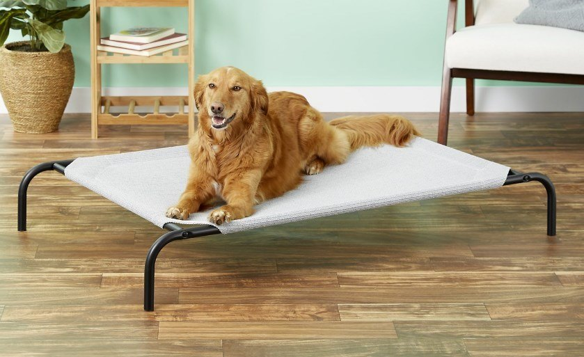 elevated dog bed reviews