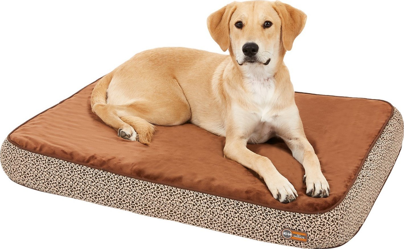 orthopedic beds for older dogs