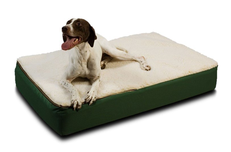 dog bed for older dogs reviews
