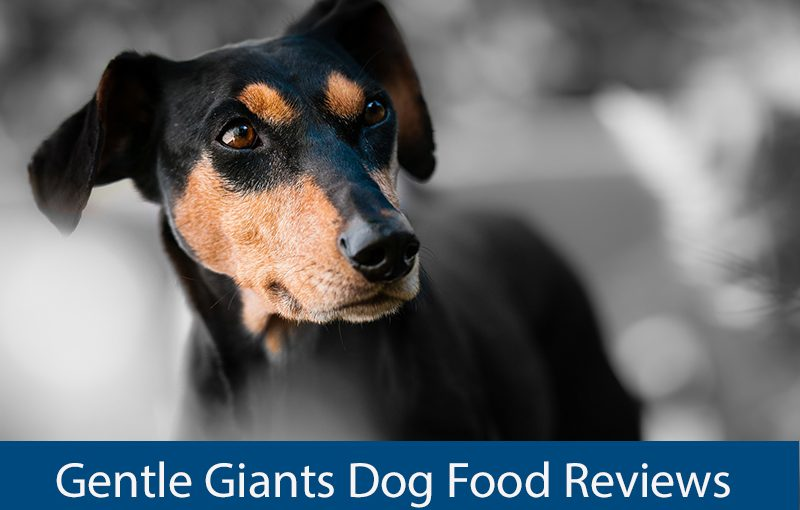 gentle giant dog food reviews
