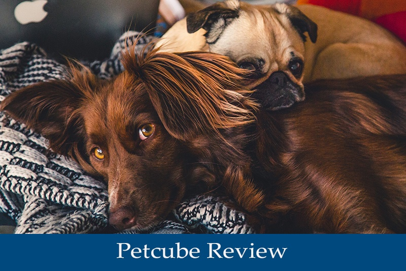 Petcube Review