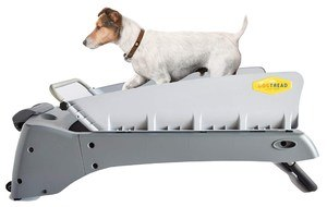 DogTread Small Dog Treadmill