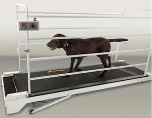 large dog treadmill
