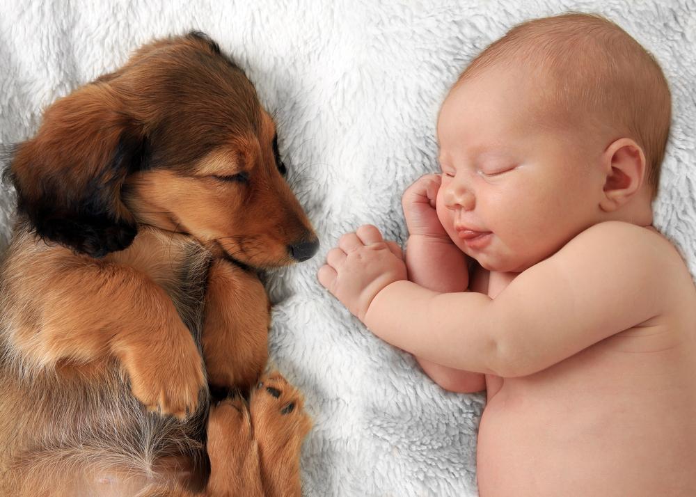 Dog Sleeping With Baby