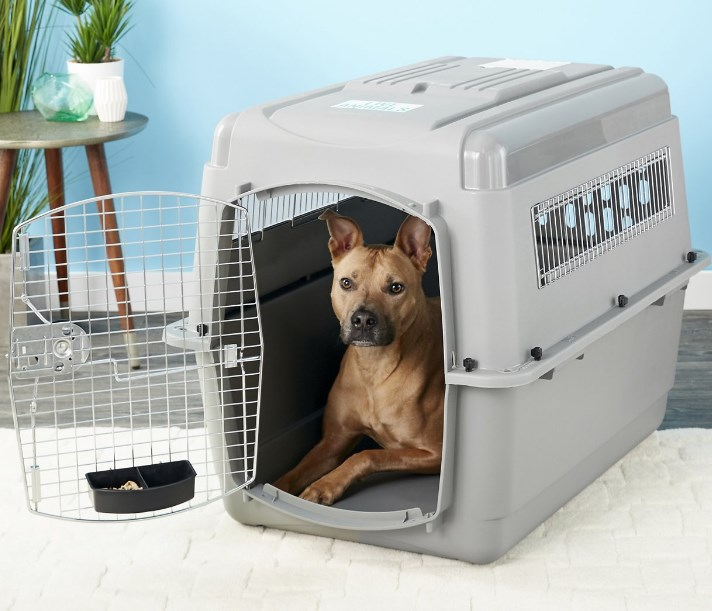 petmate sky kennel with a dog