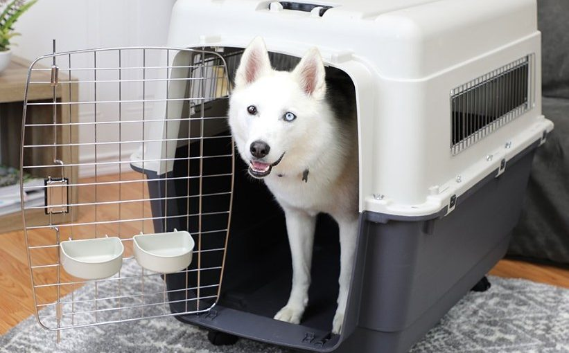 sportpet designs kennel with dog