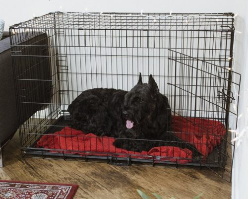 metal crate with a dog