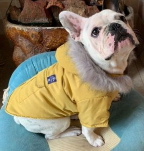 petbobo dog down jacket hoodie coat
