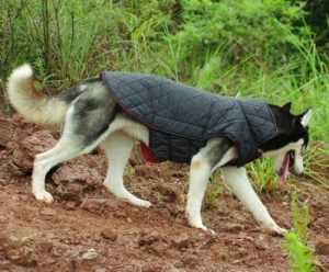 ThinkPet Reversible Jacket