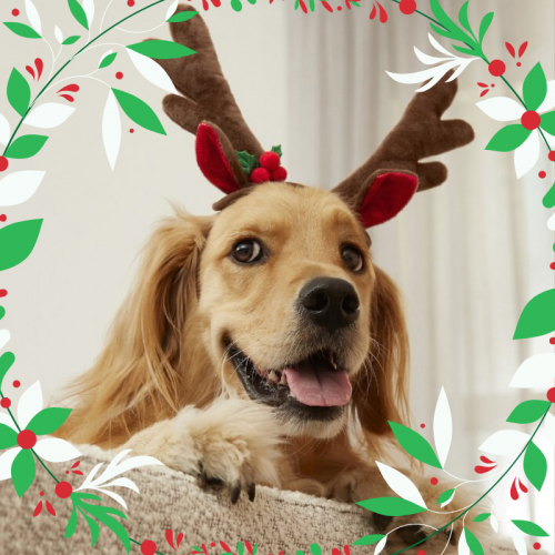 Keeping Your Canine Safe and Sound This Christmas