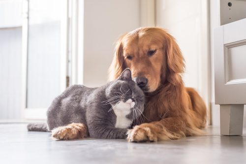 Dog Laying With Cat