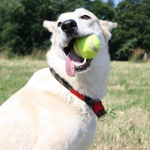 Dog Catching The Tennis Ball