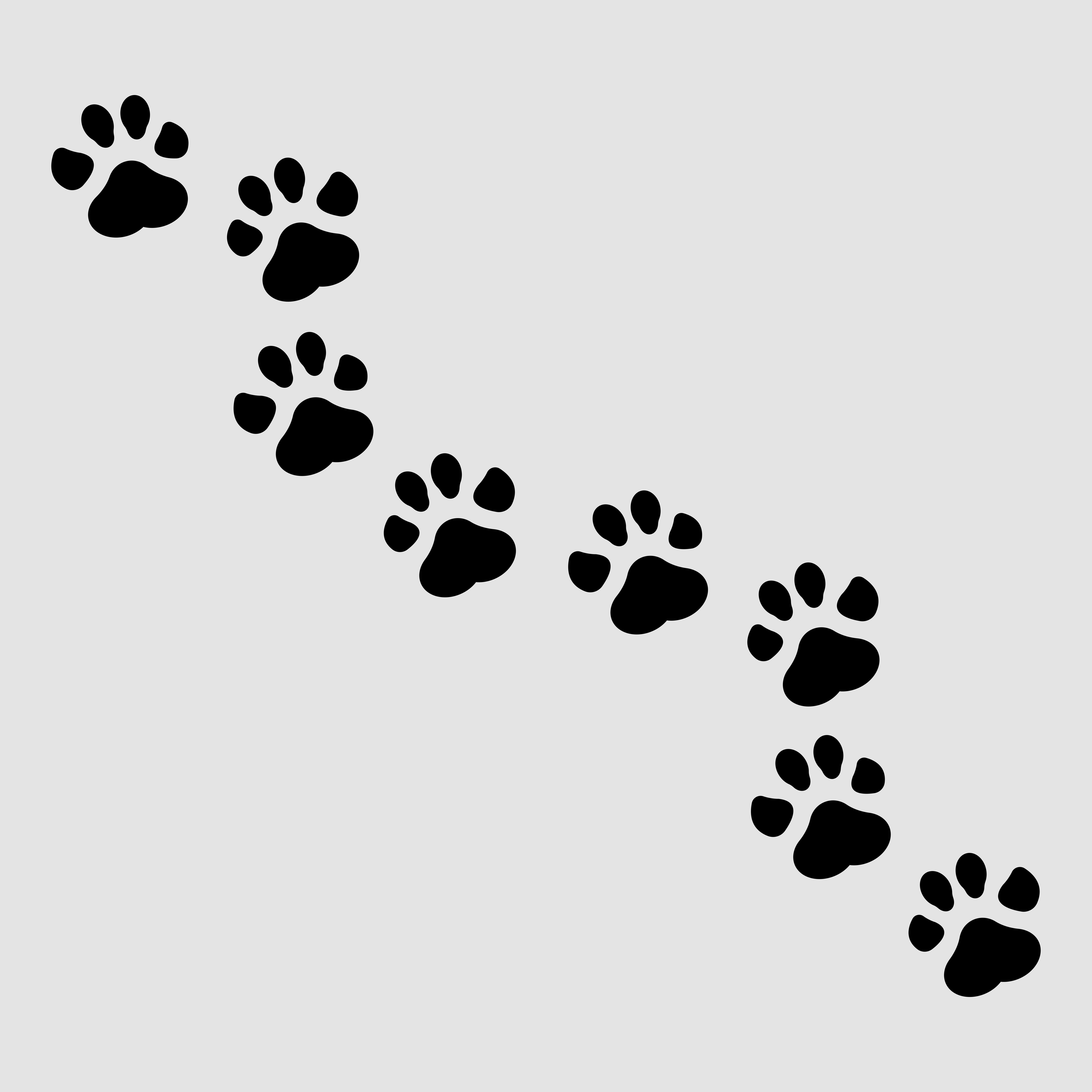 Image of Dog Traces