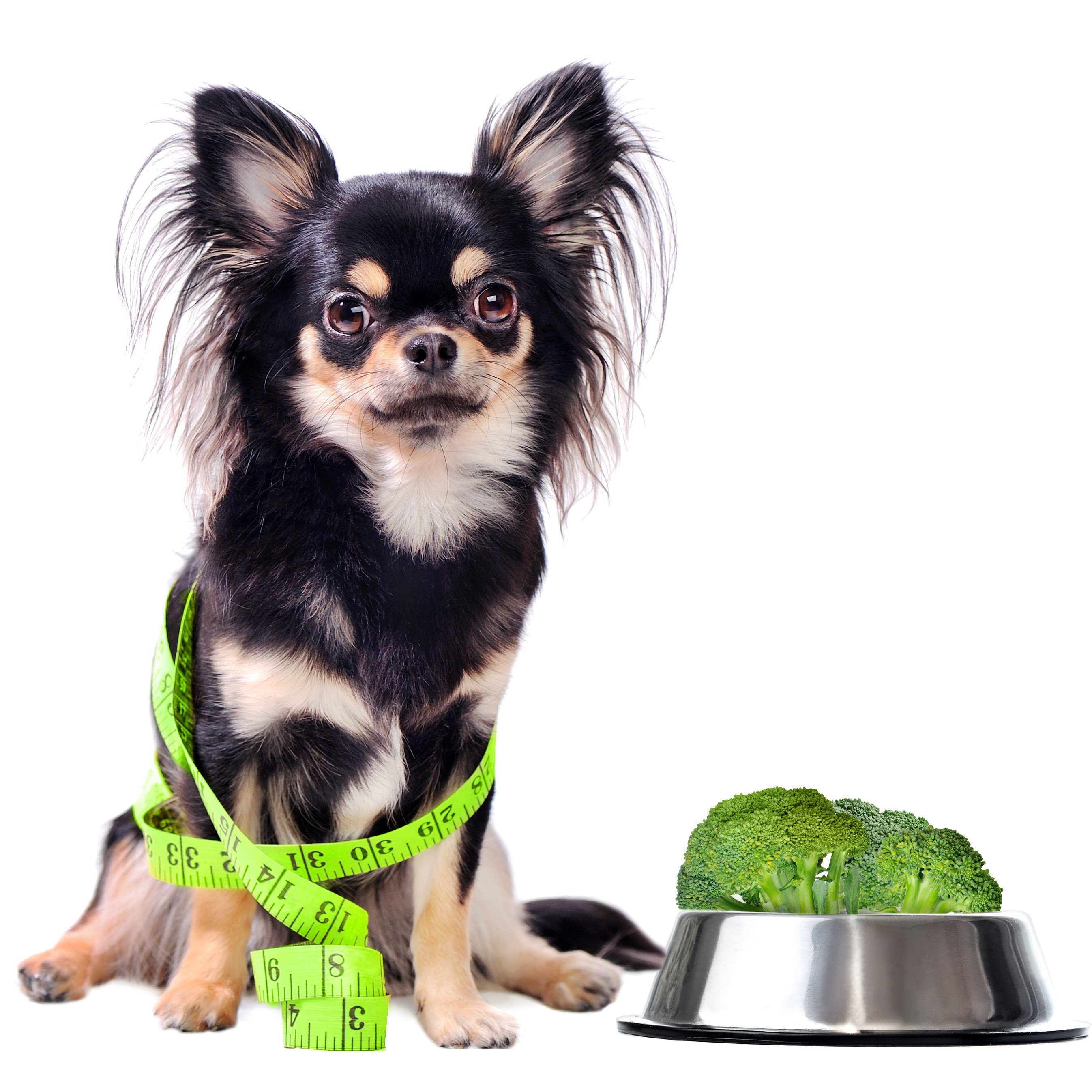 Vegetarian Dog with a Bowl of Broccoli