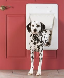 Dalmatian in the PetSafe Electronic SmartDoor