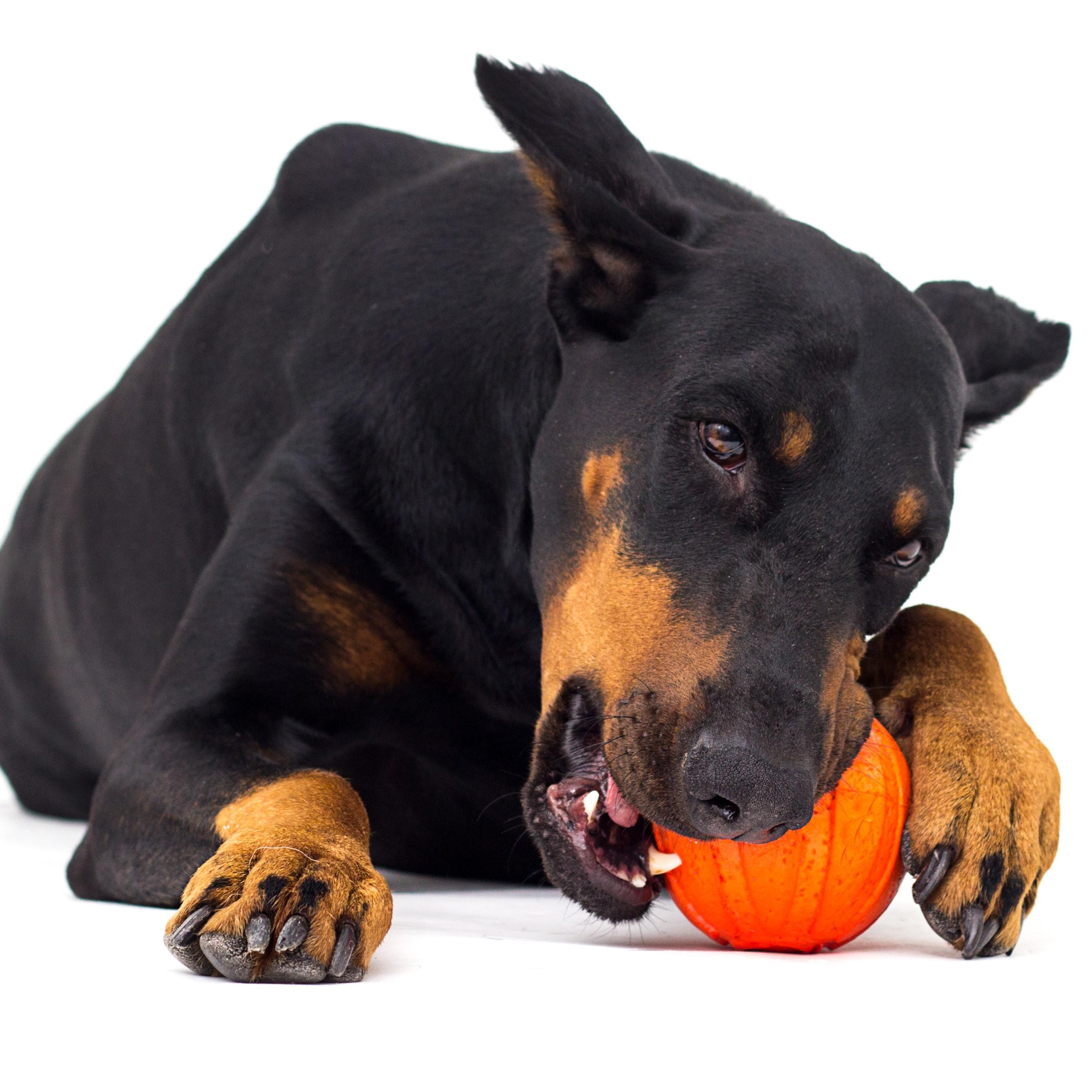 9 Best Dog Balls in 2020