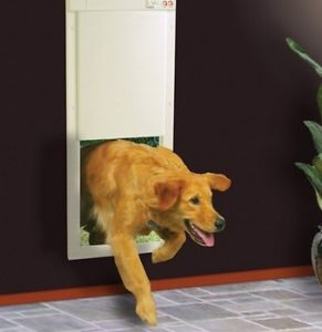 Dog runnign throgh the High Tech Pet Products PX-2 Power Pet Fully Automatic Pet Door