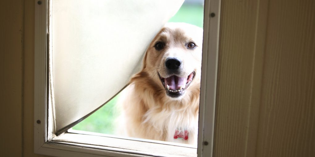 Cute dog looking through doggie door