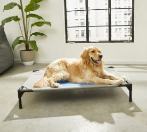 K&H Pet Products Coolin' Cot Elevated Dog Bed