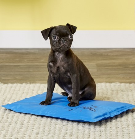 Black Pug Dog sitting on a K&H Pet Products Coolin' Pet Pad Dog Mat