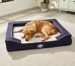 Labrador Dog lying on Sealy Lux Premium Orthopedic Bolster Dog Bed