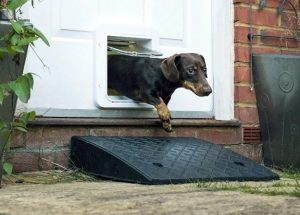 SureFlap Microchip Cat & Small Dog Door Connect with a Dachshund in it