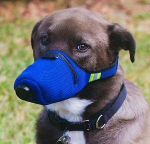 EMGOD 4 Layers Dog Mask with Breathing Valve