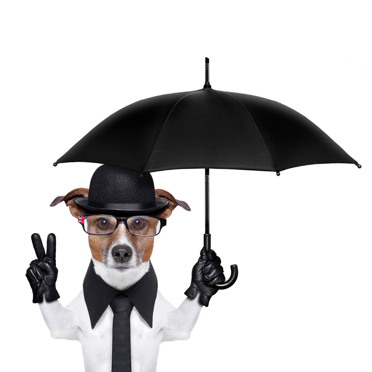 5 Best Dog Umbrella in 2020