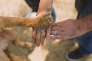 two person with rings on ring fingers and a dog paw