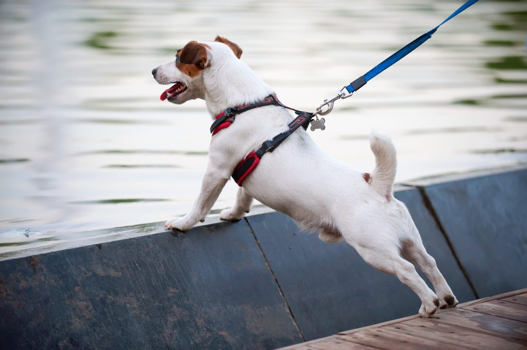 Person holding white dog on a harness near the water