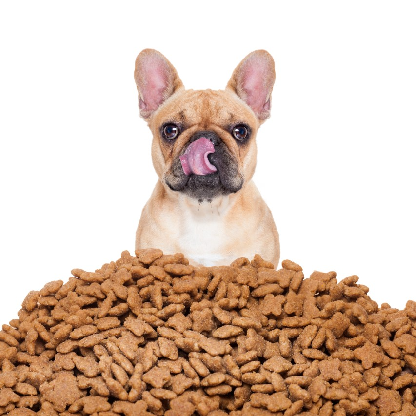 Best Hypoallergenic Dog Food