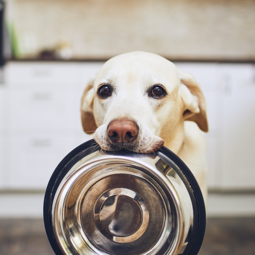 Dog Holding Plate in His Teeth