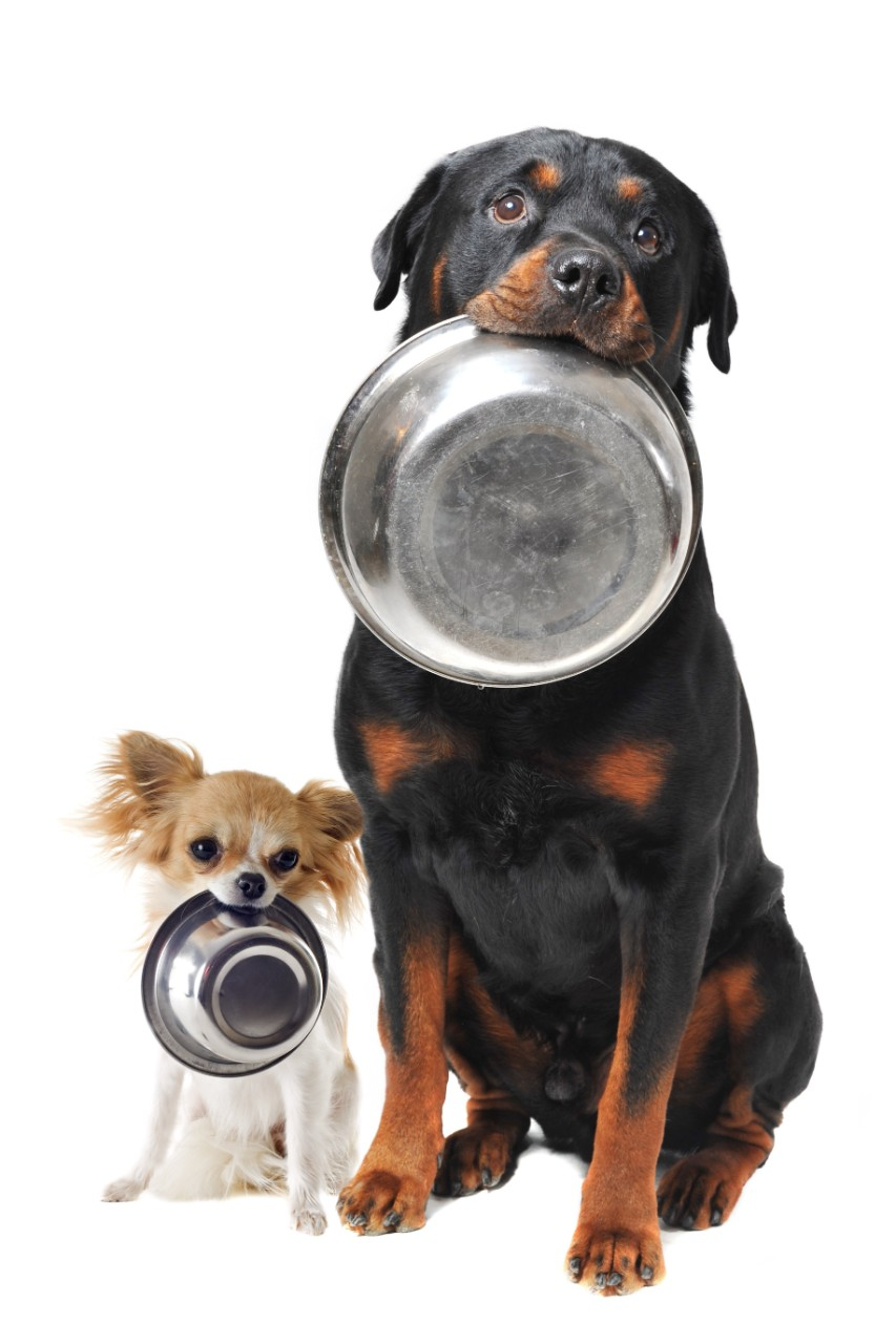 Dogs With Plates Isolated on White