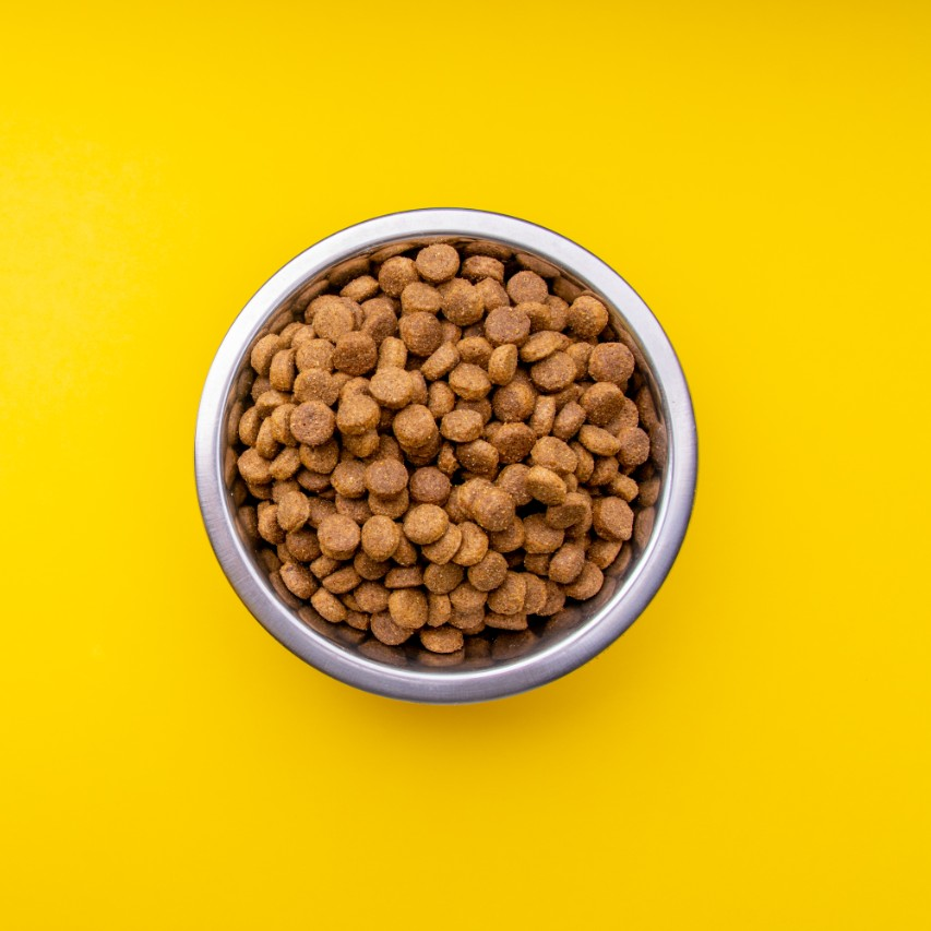 Plate With Dog Food Isolated on White