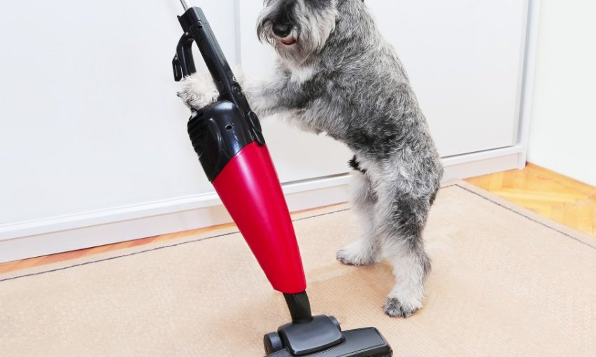 10 Tips To Eliminate Dog Odor & Keep Your House Smelling Fresh