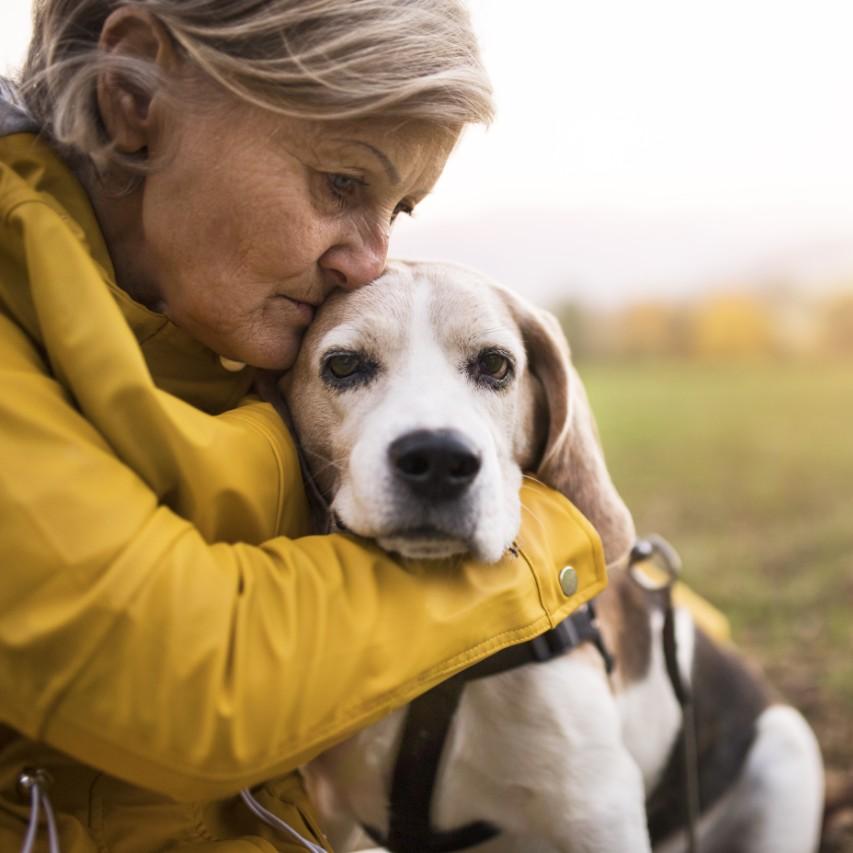 Best Dogs for Seniors - Top Dogs for Elderly | Herepup