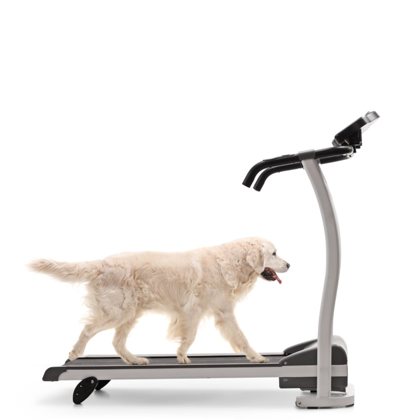Dog Running on Treadmill