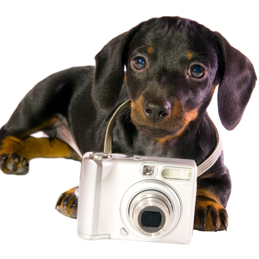 Dog With The Camera Isolated on White