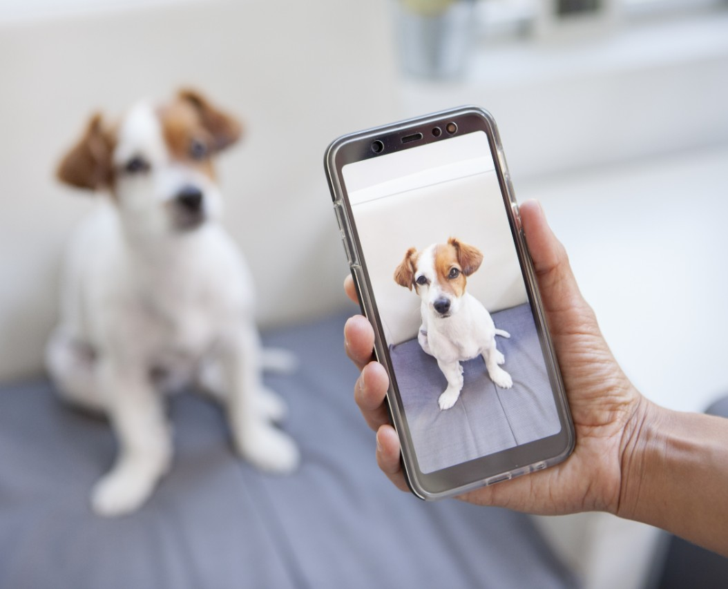 Photo of the Dog on the Phone